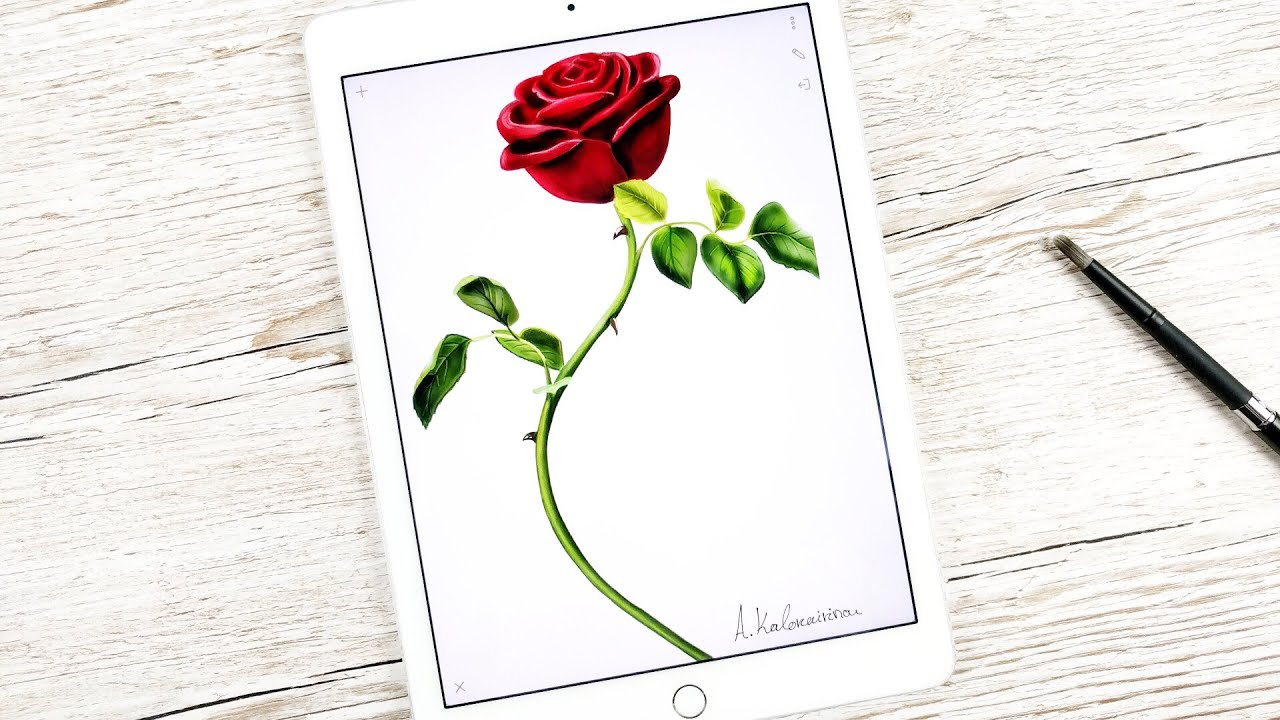 Rose From Beauty And The Beast Drawing At Getdrawings Free For