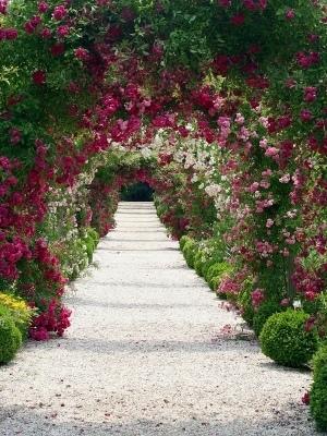 300x400 Most Beautiful Rose Garden Eecnnfiv Decorating Clear