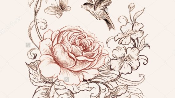 570x320 Beautiful Rose Pencil Drawings Graphic Drawing Roses And