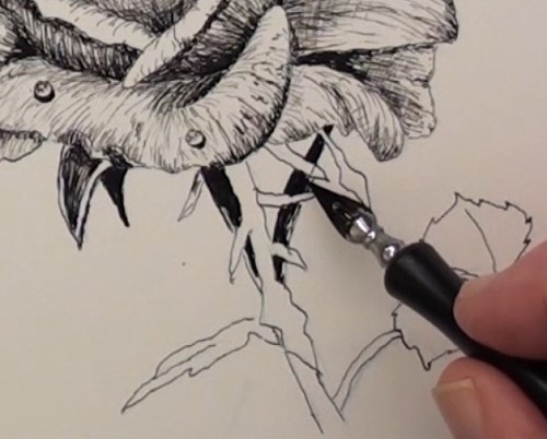 500x402 How To Draw A Rose In Pen And Ink Online Art Lessons