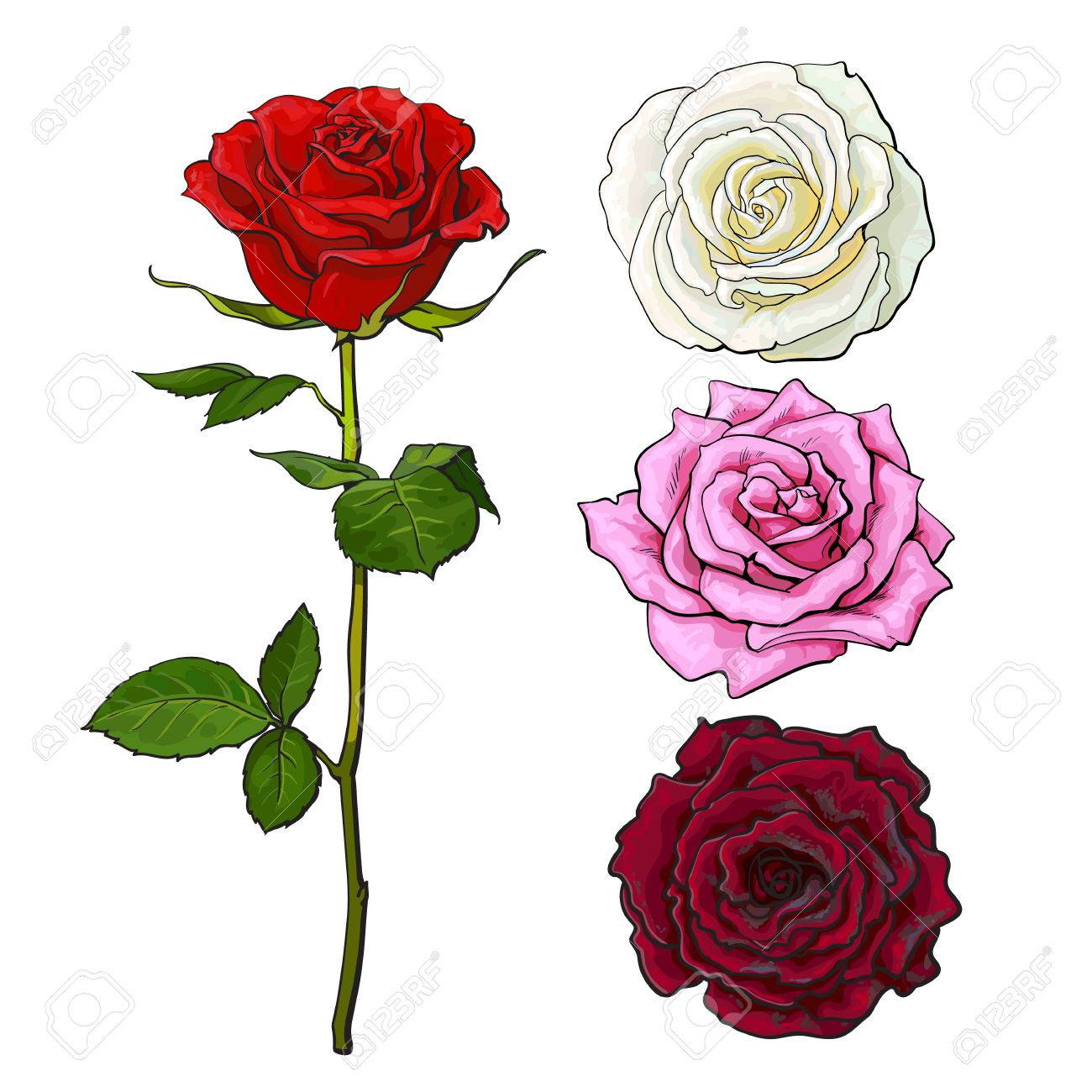 1300x1300 Pink, White, Deep Red Open Rose Bud And Flower With Green Leaves