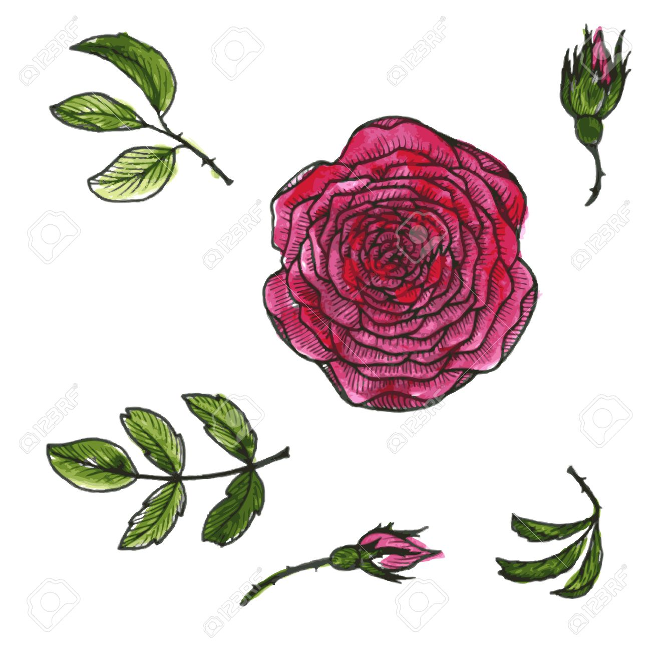 1300x1300 Set Of Flowers And Leaves Of Red Roses Drawing By Watercolor