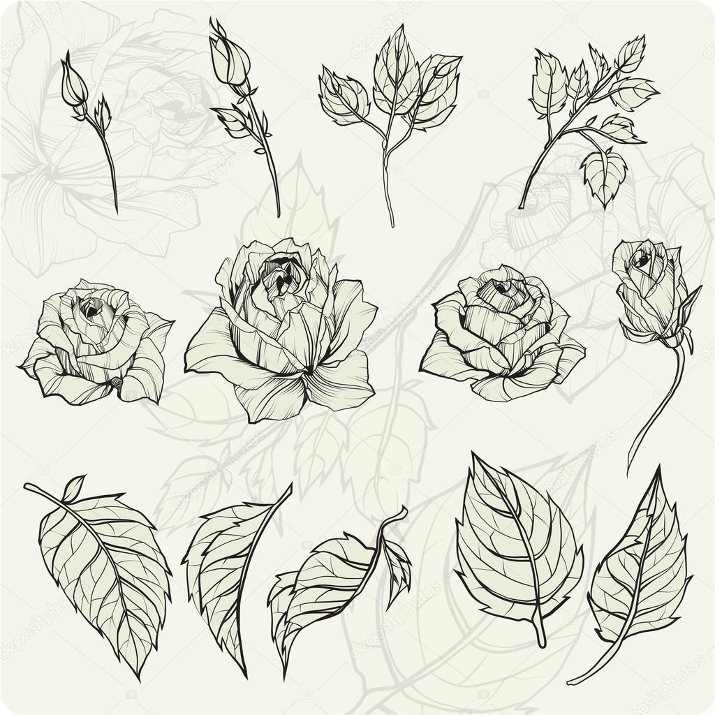 Rose Leaves Drawing At Free For Personal Use Flower Line Diagram Simple Of Bud Stock Vector 1024x1024 Sketch Flowers Set Ollallya