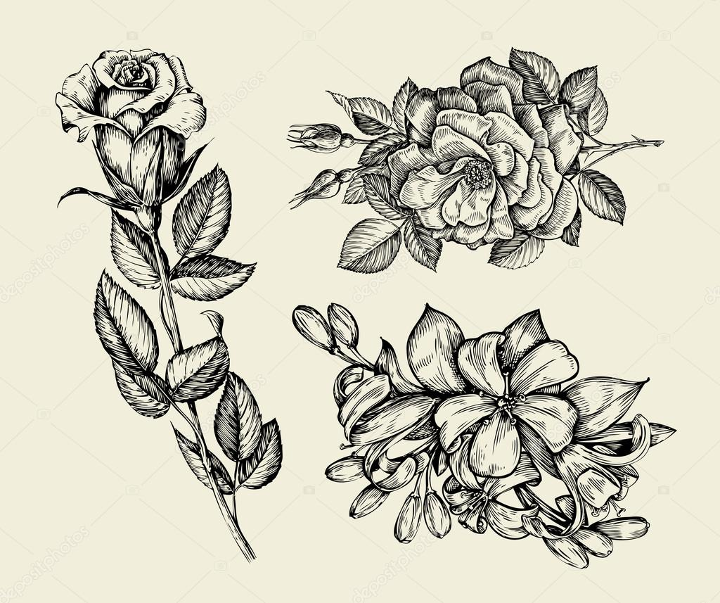 1024x857 Flowers. Hand Drawn Sketch Flower, Rose, Floral Pattern. Vector