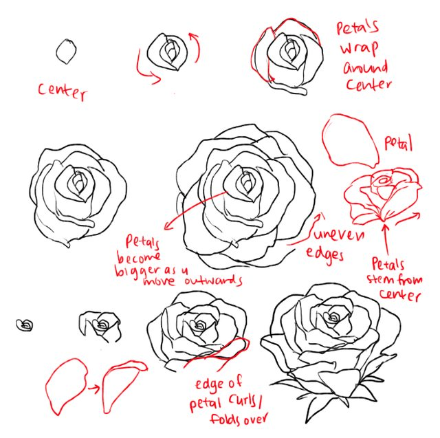 640x637 How To Draw Roses Opening In Full Bloom Step By Step Drawing