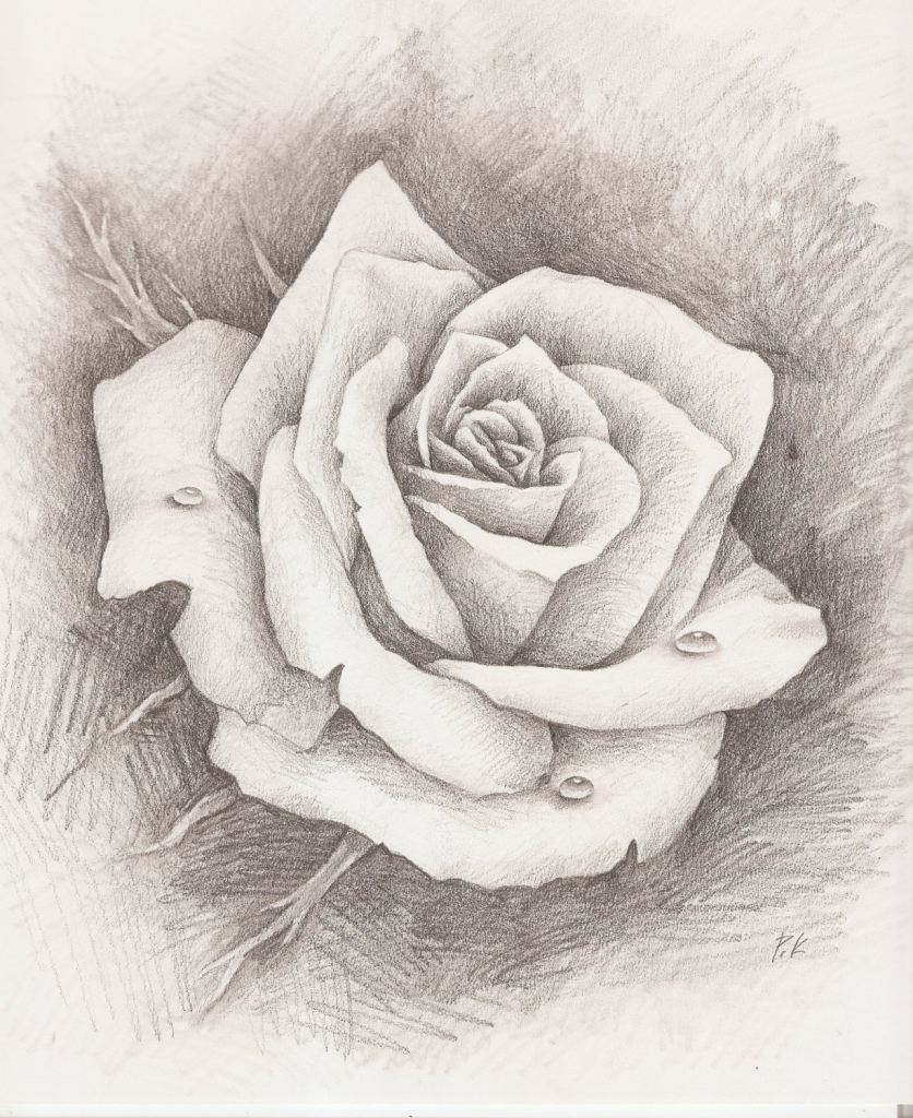 836x1024 pencil sketch rose pencil sketch of rose pencil sketch rose