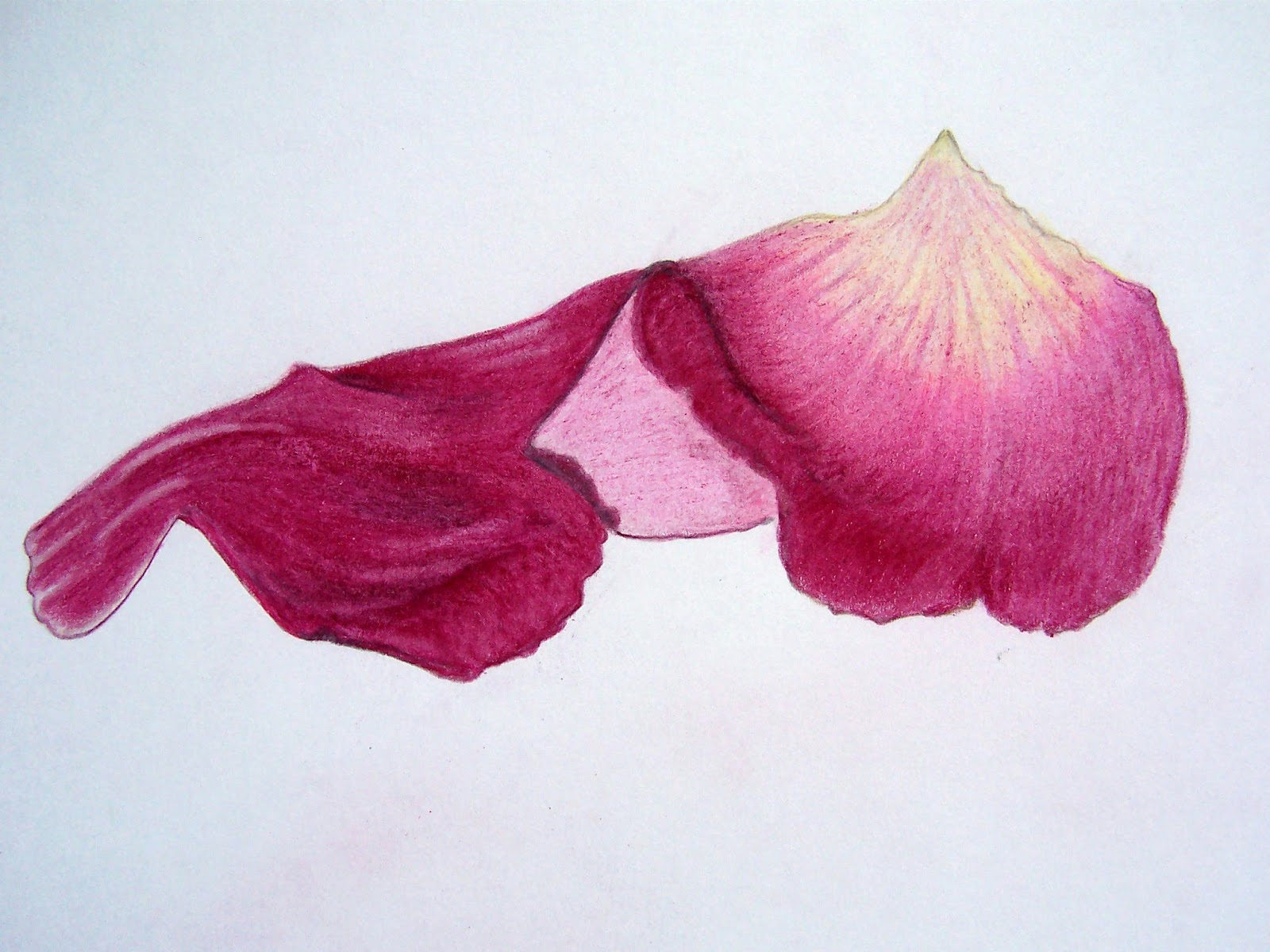 1600x1200 Drawing For Beginners! Rose Pot Pourri A Collection Of Rosy