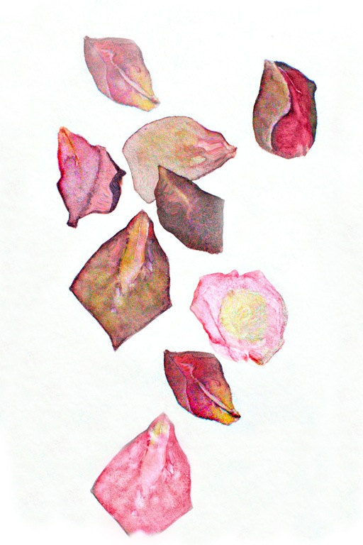 512x768 Notes From The Field Rose Petals Valentine Watercolor