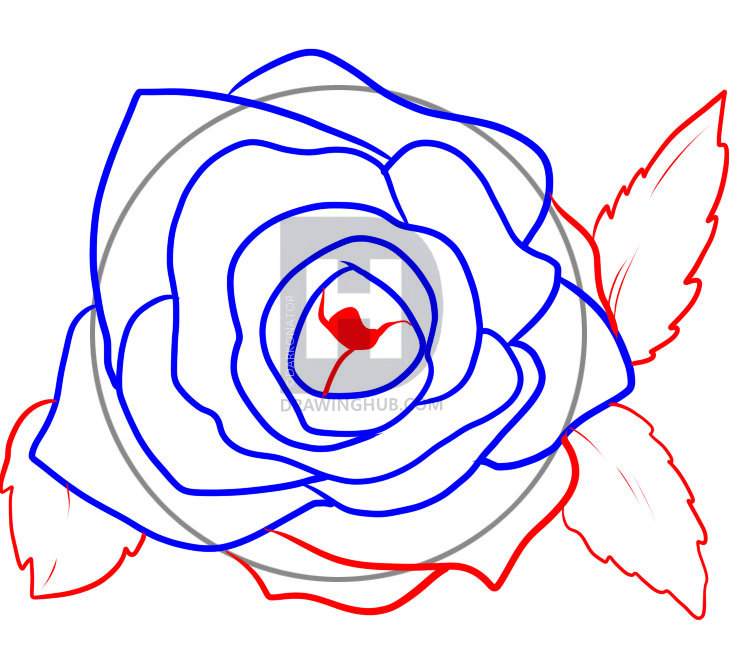 732x651 Pictures How To Draw Rose Petals,