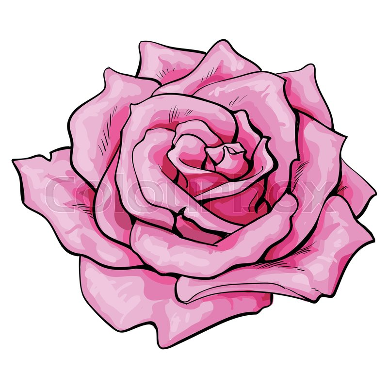 800x800 Deep Pink Rose Bud, Top View Sketch Style Vector Illustration