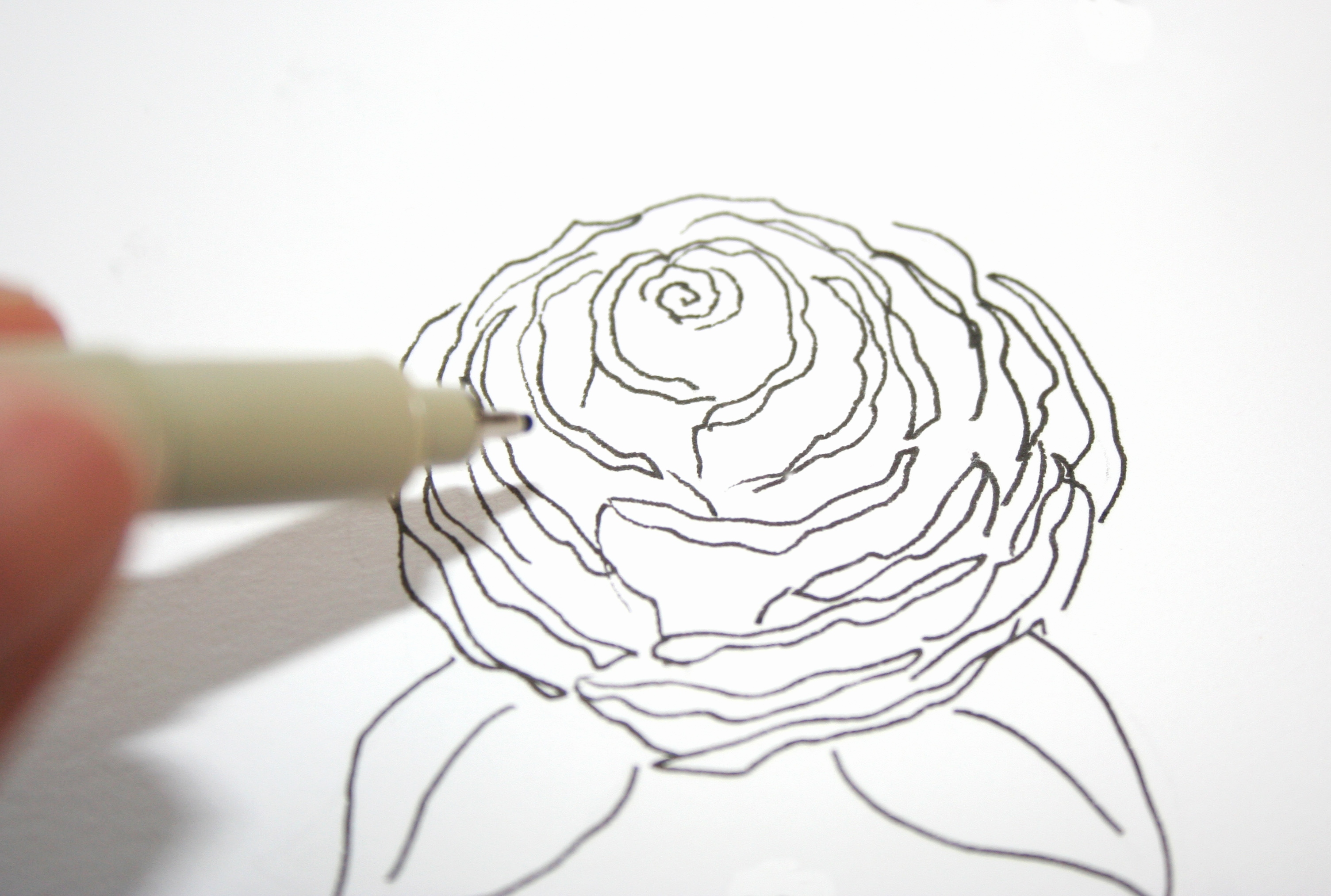 3009x2026 Easy Drawing Rose Fresh Rose Drawing Outline