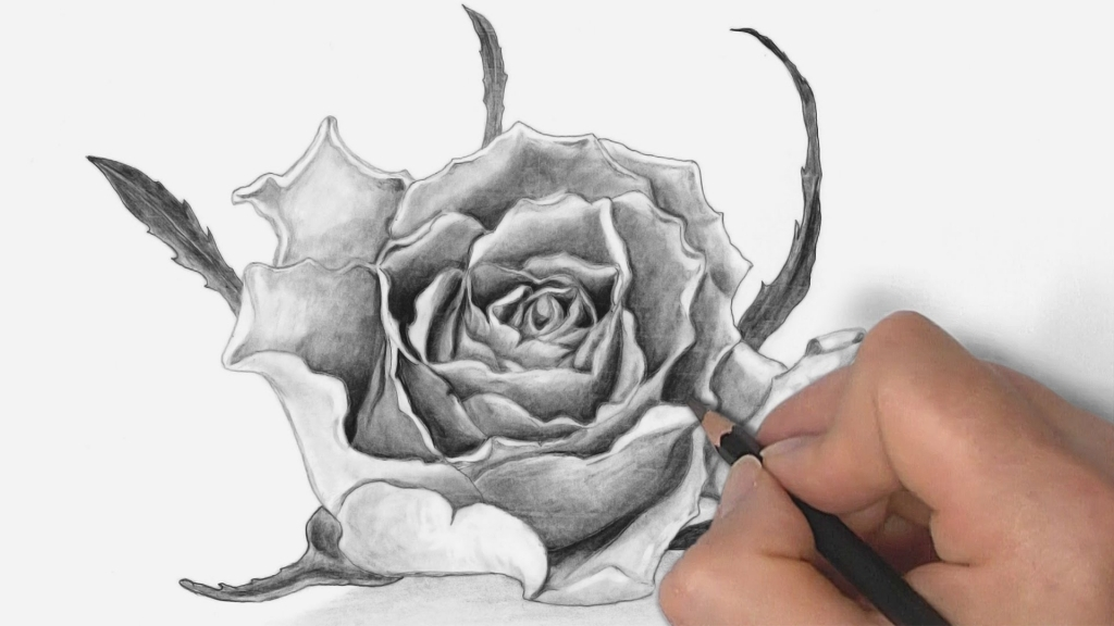 1024x576 Rose Drawings In Pencil How To Draw A Rose With Pencil Drawing