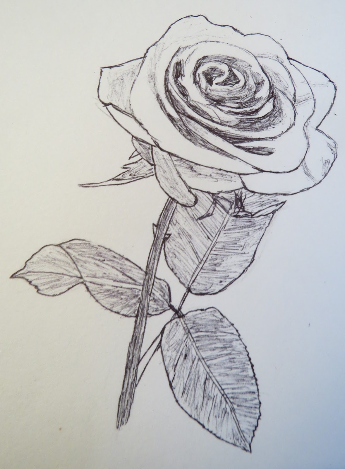 1179x1600 The Autistic Naturalist How To Draw Roses (Valentine's Day Special)