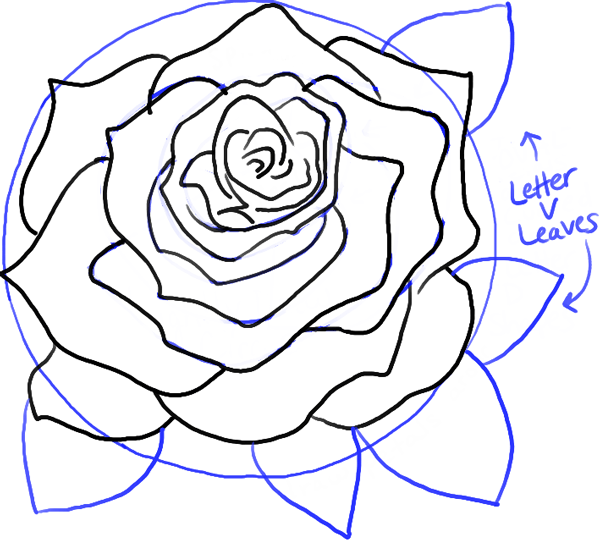 600x540 How To Draw Roses Opening In Full Bloom Step By Step Drawing