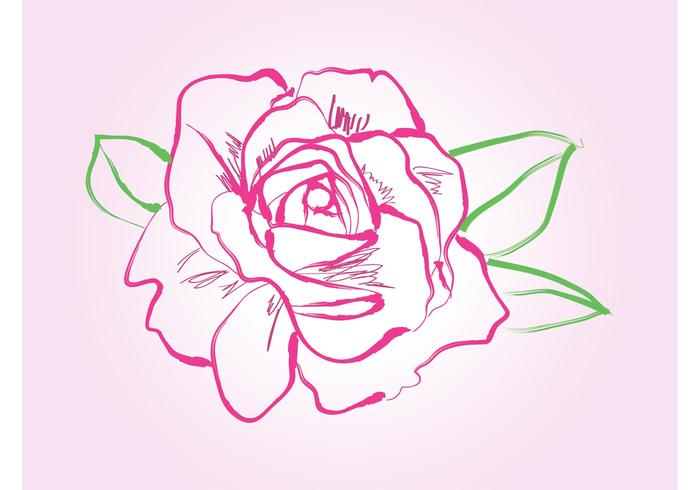 700x490 Rose Drawing Vector