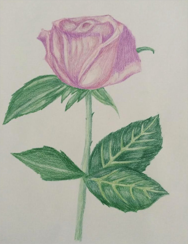 600x781 Rose Drawings