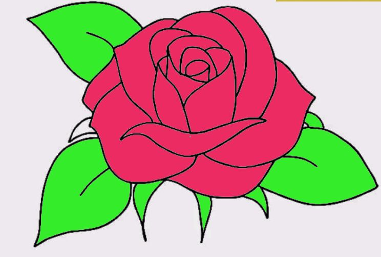 744x501 34 How To Draw A Rose