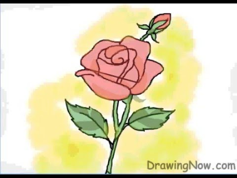 480x360 How To Draw A Red Rose