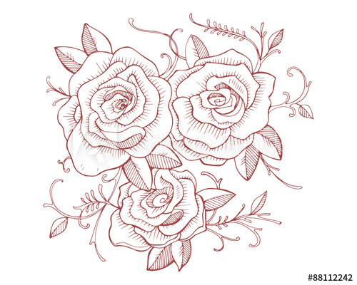 500x400 Three Roses Drawing