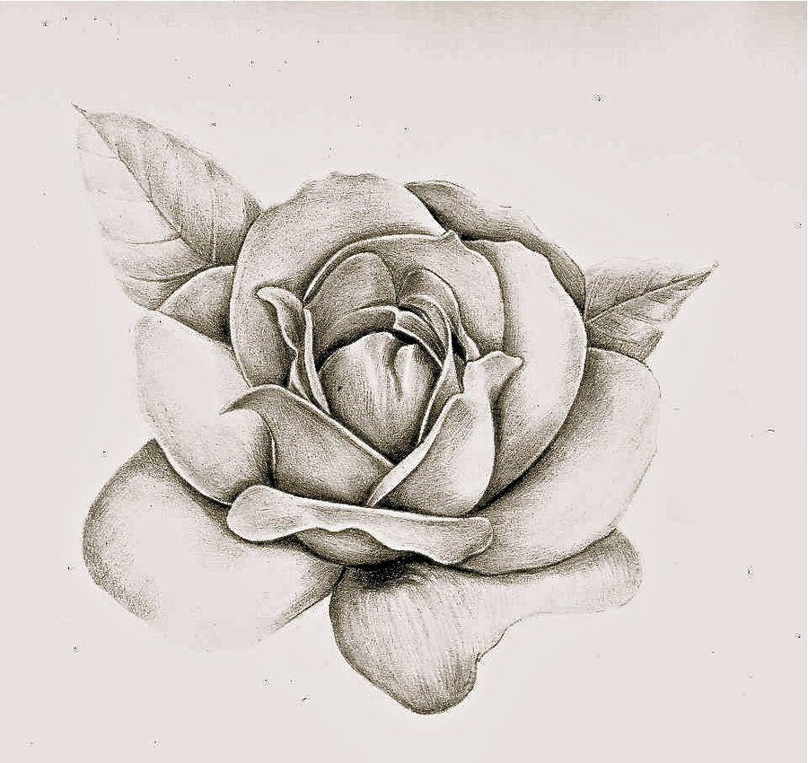 How To Draw A Rose Realistic