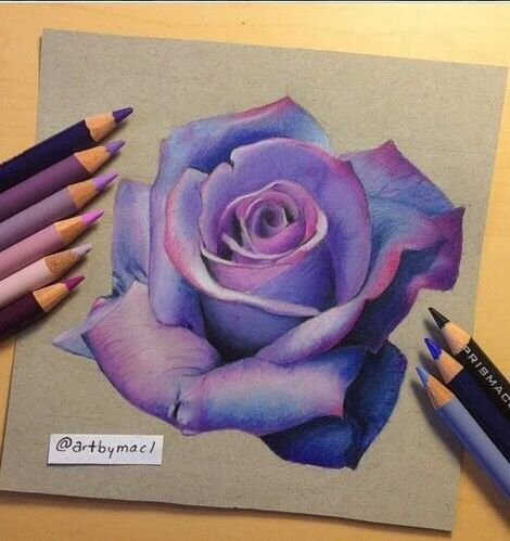 470x499 Lavender Rose Drawing Inspiring Artworks Lavender