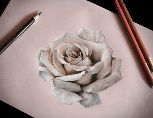 500x388 How To Draw A Realistic Rose In Pencil Drawings