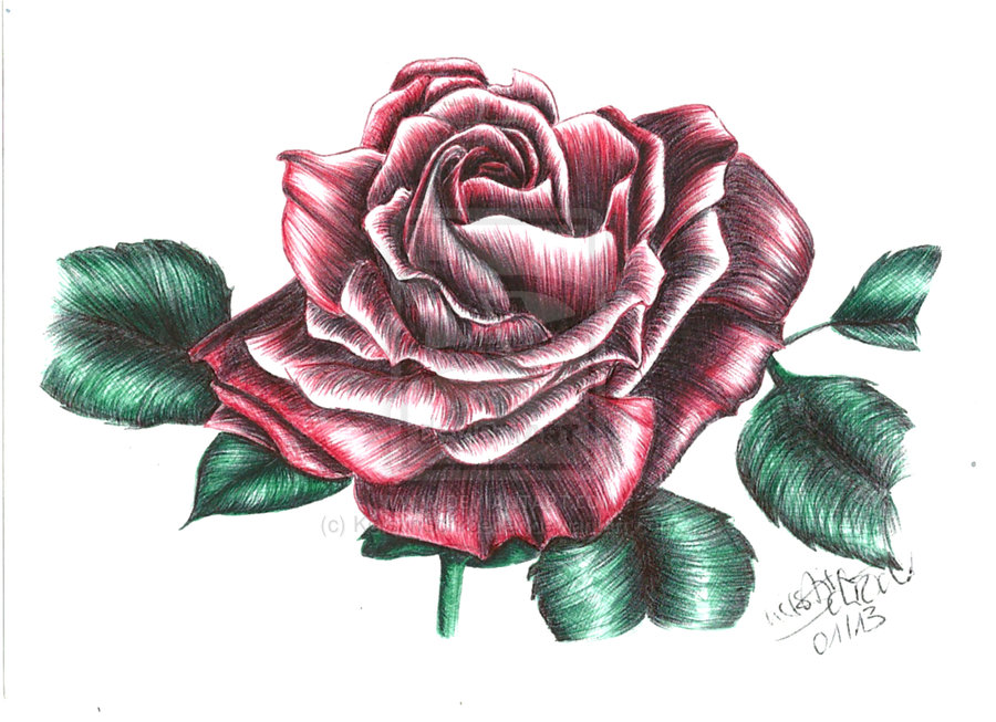 900x653 Red Rose Sketch Red Rose By Kerstinschroeder Drawings