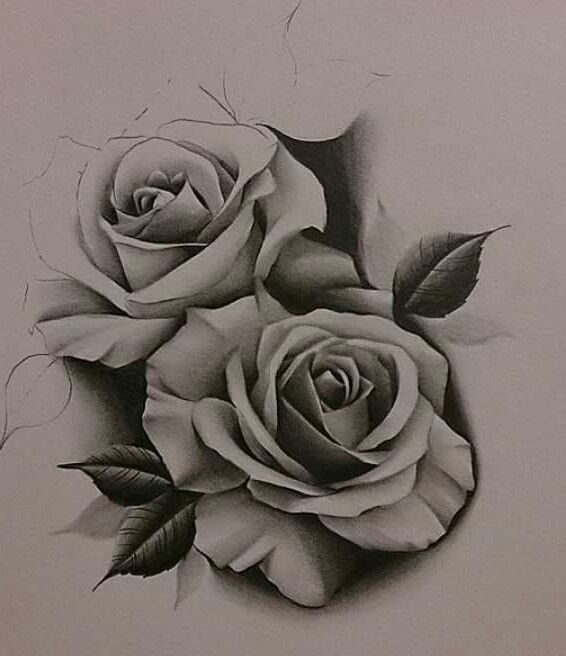 566x656 Gallery Rose Tattoo Sketch,