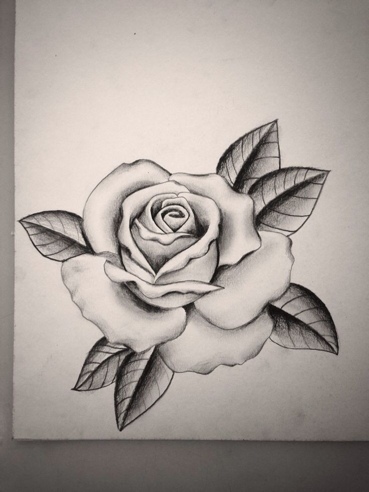 736x981 Image Result For Rose Tattoo Designs Rose Tattoos