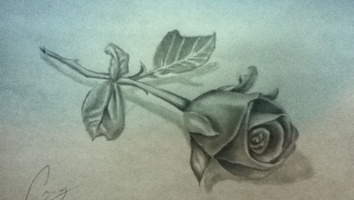 730x412 Rose Drawings , Art Ideas Design Trends
