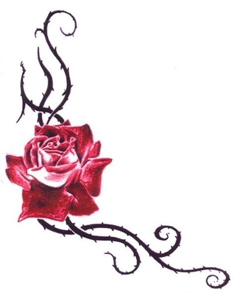 480x622 This Kind Of Size Rose For The Cover Up. And Liking These Thorns