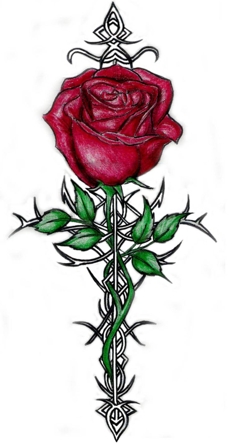 736x1430 30 Best Rose With Thorns Tattoo Images On Thorn Tattoo