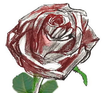 350x309 How To Draw A Rose Bud