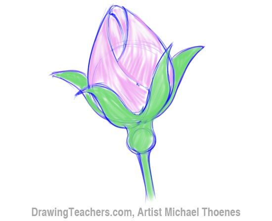 550x447 Image Gallery Rosebud Drawing Part Two The Rose
