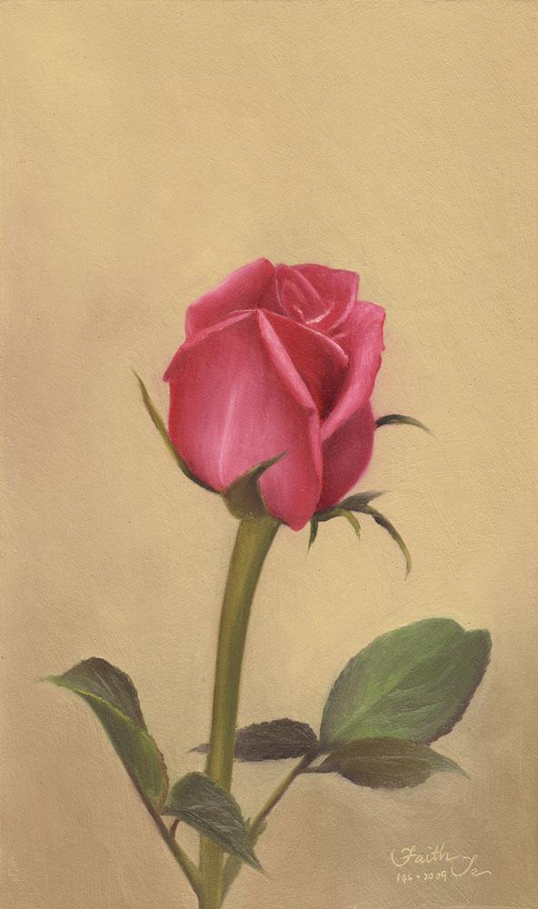 592x1000 Pink Rosebud