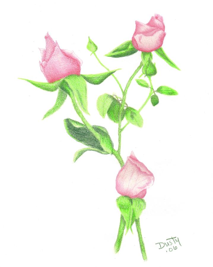 718x900 Pink Rosebud Bouquet Drawing By Dusty Reed