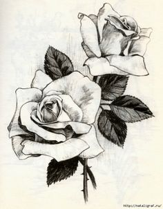 236x303 Black And White Drawings Of Roses Black And Red Roses Drawings