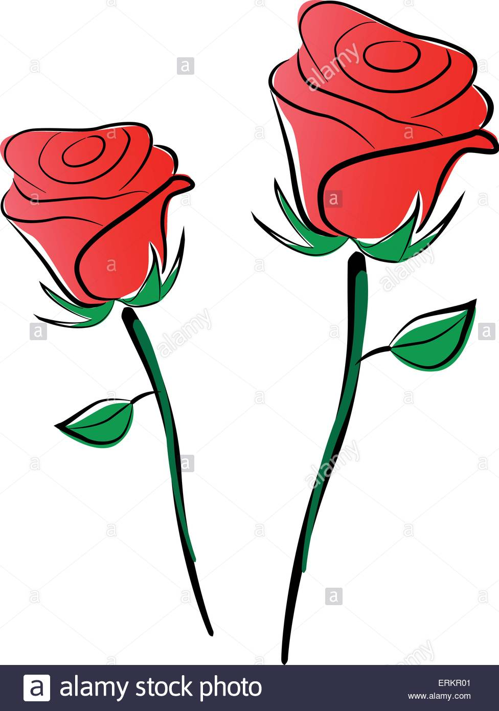976x1390 Vector Illustration Of Roses Drawing On White Background Stock