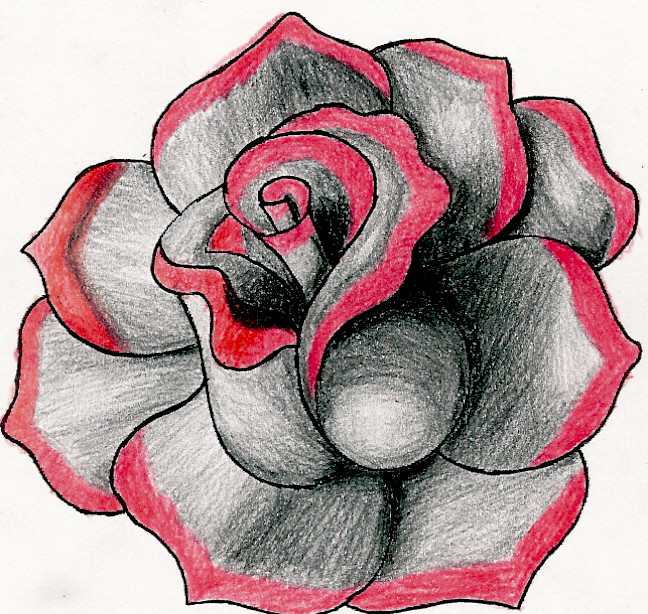 648x614 Black And Red Rose By Sand Kassel