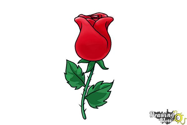 600x400 How To Draw A Rose Easy