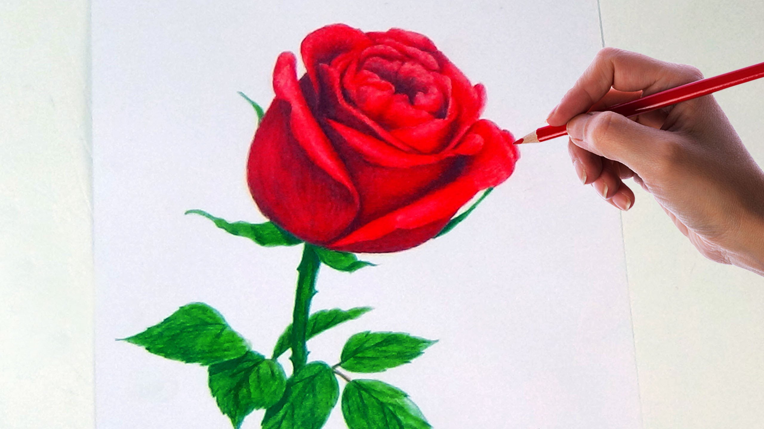 2560x1440 Drawing A Rose Flower With Simple Colored Pencils