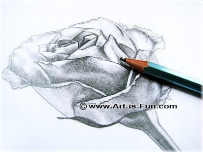 400x300 How To Draw A Rose Learn To Draw Rose Pencil Drawings Art Is Fun