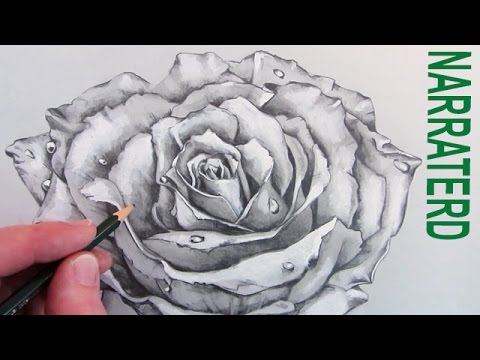 480x360 How To Draw A Rose Narrated Pencil Drawing