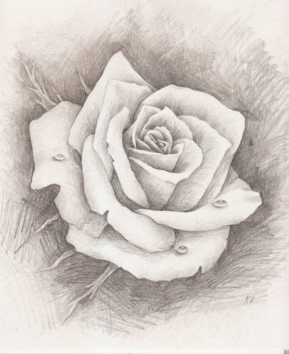1225x1500 Pencil Sketches Of Rose With Image Pencil Drawings Pencil Drawing