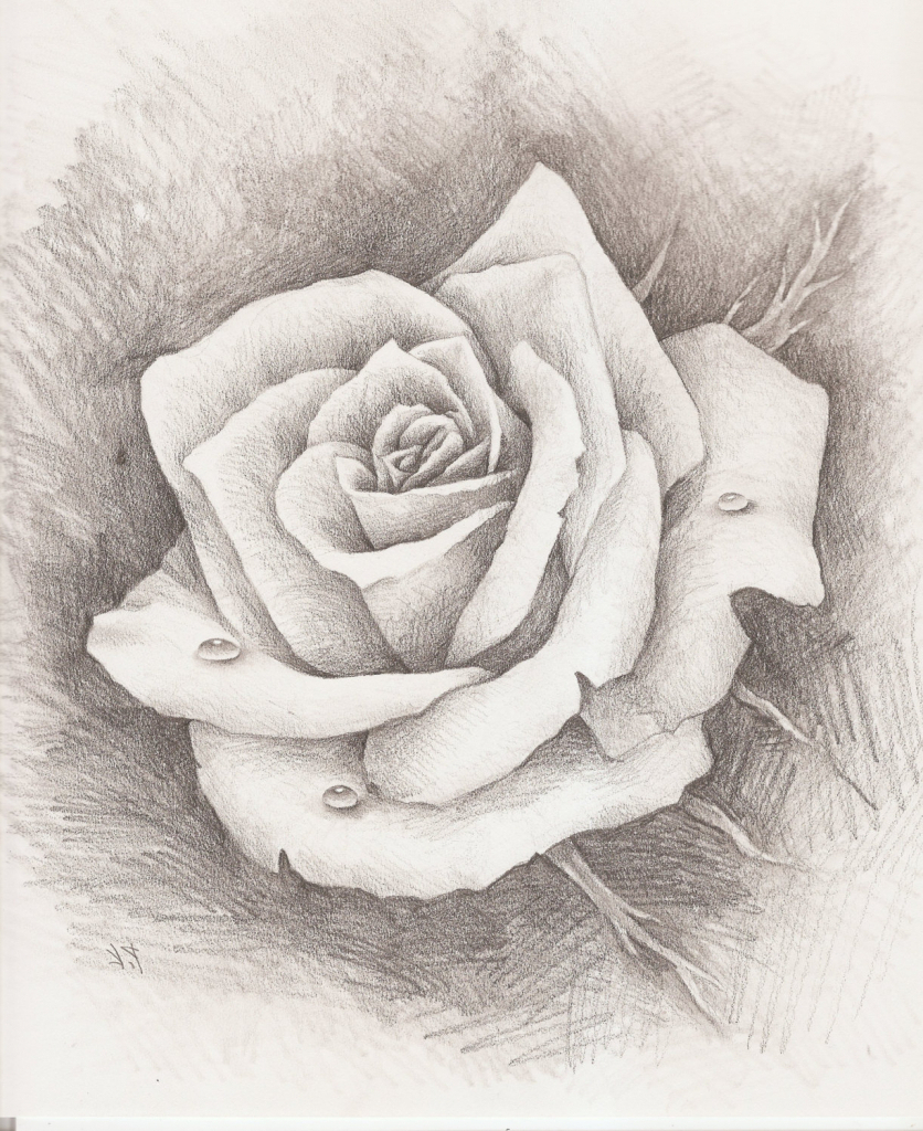836x1024 Realistic Rose Pencil Sketches Pencil Drawing Of Rose Pencil
