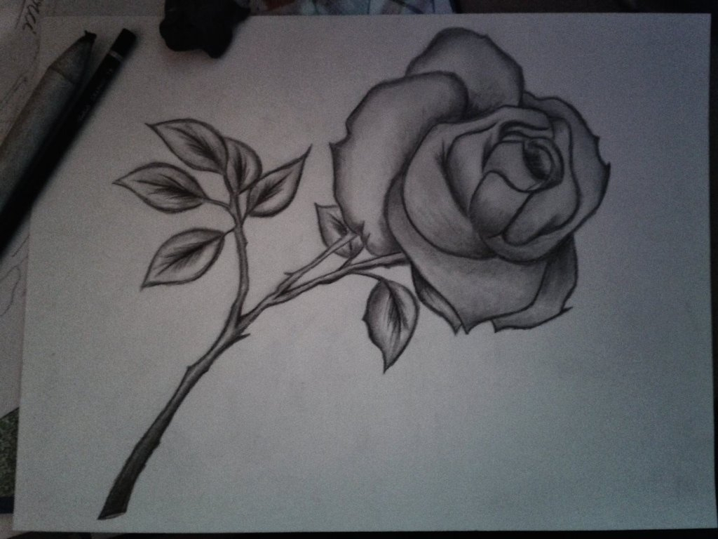1024x768 Rose Pencil Sketch Drawing Pencil Paintings Of Flowers Pencil