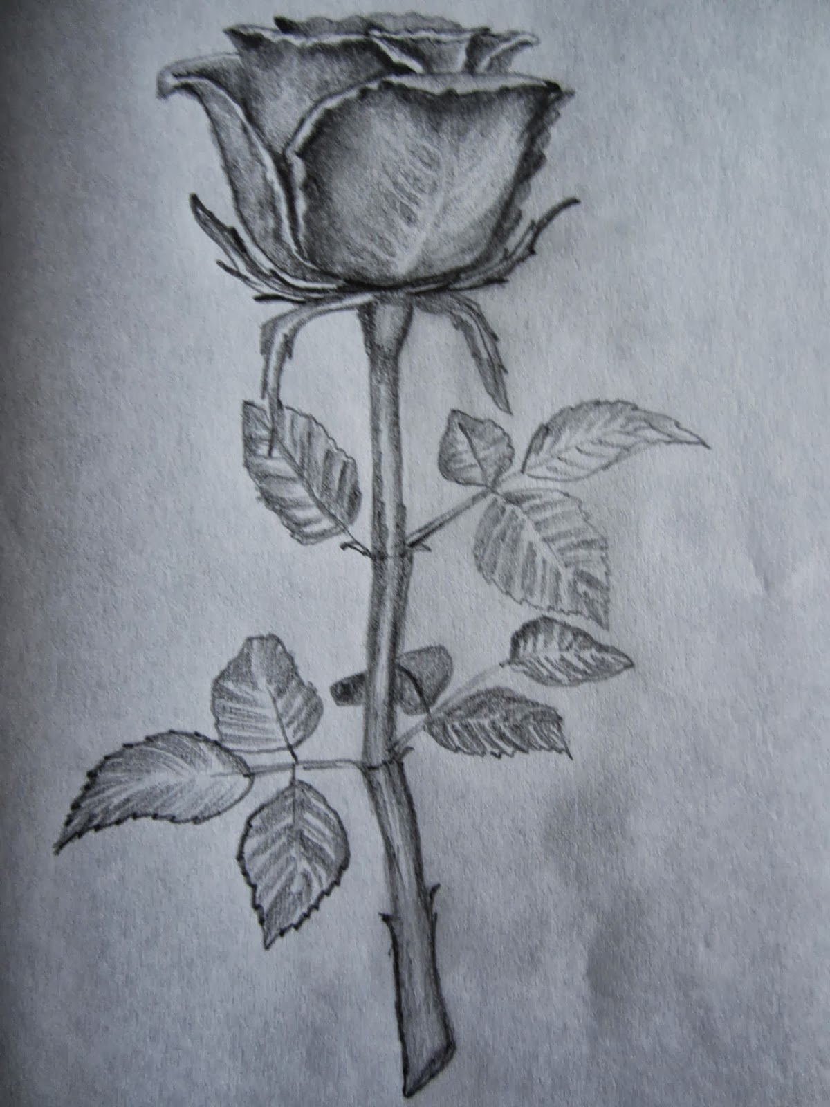 1200x1600 Simple Pencil Rose Drawing Hd Hoontoidly Rose Drawings In Pencil