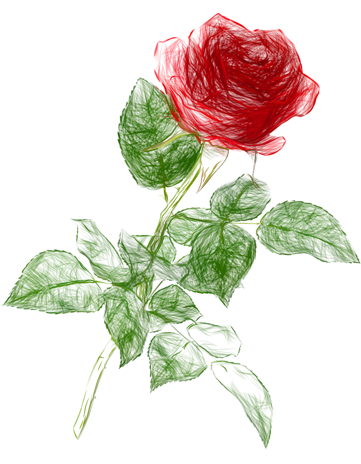 1246x1600 Drawing Pencil Color Rose Png Clipart Picture