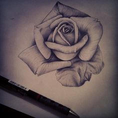 236x236 How To Draw A Rose In Pencil, Draw A Realistic Rose, Step By Step