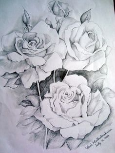 236x314 Pencil Art Of Rose, Beautiful Flower Drawings For Inspiration